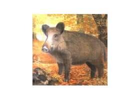 Scheibe Wild Boar