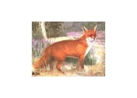 Scheibe Fox