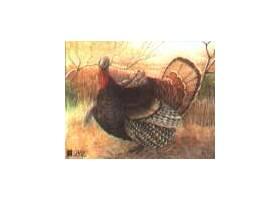 Scheibe Turkey